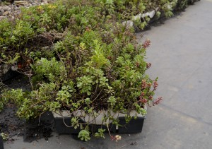 The green roof on top of the Engineering Complex has sections containing different plants that fit together like puzzle pieces.