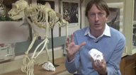 Marshall University_ Biology in 3 - D - YouTube thumbnail