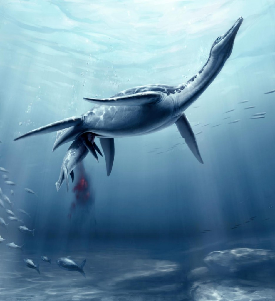 Plesiosaur giving birth. Illustration by S. Abramowicz, courtesy of Natural History Museum of Los Angeles County.