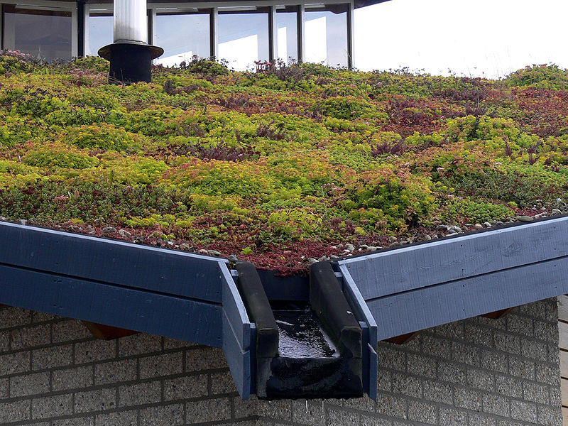 EVA-_Lanxmeer_Green_roof